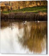 Evening By The Pond Canvas Print