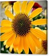 Evening Flower Canvas Print