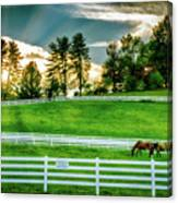 Evening Graze In Tennessee Canvas Print