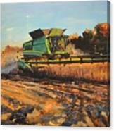 Evening Harvest Canvas Print