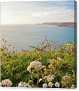 Evening Light In Cornwall Canvas Print
