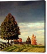Evening Pasture Canvas Print