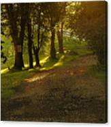 Evening Path Canvas Print