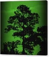 Evening Pine Canvas Print