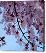Evening Sky Pink Blossoms Art Prints Canvas Spring Baslee Troutman Canvas Print