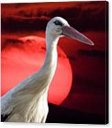 Evening Stork  Canvas Print