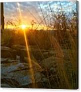 Evening Sun Rays In The Desert Canvas Print