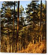 Evening Woods Canvas Print