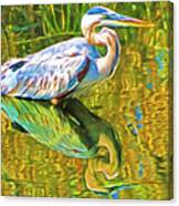 Everglades Blue Heron Canvas Print