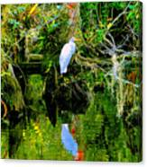Everglades Egret Canvas Print
