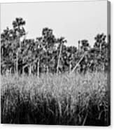 Everglades Grasses And Palm Trees 2 Canvas Print