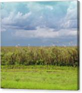 Everglades Canvas Print