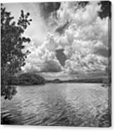 Everglades Lake - 0278abw Canvas Print