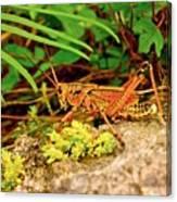 Everglades Locust Canvas Print