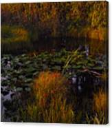 Everglades Pond Canvas Print