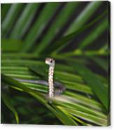 Everglades Racer Canvas Print
