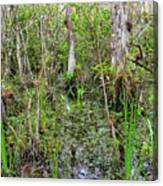 Everglades Swamp Two Canvas Print