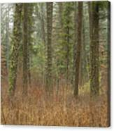 Evergreen Fog Canvas Print