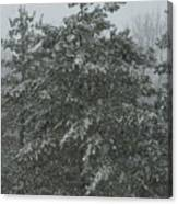 Evergreen Snowfall Canvas Print