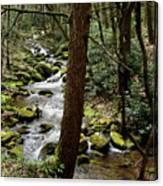 Evergreen Stream Ravine Canvas Print