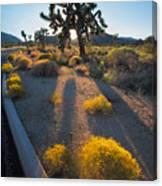 Every Moment Joshua Tree National Park Canvas Print