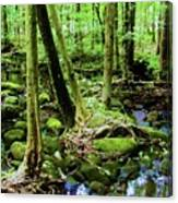 Evolution Of A Forest In Spring  Canvas Print