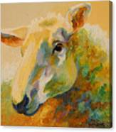 Ewe Portrait IIi Canvas Print
