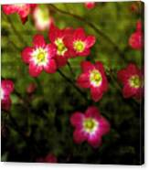 Exclamation Canvas Print