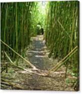 Exlporing Maui's Bamboo Canvas Print