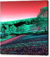 Exmoor In The Pink Canvas Print