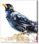 Myna Bird From Thailand Canvas Print