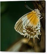 Exotic Butterfly On Tree Bark Canvas Print