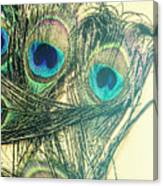 Exotic Eye Of The Peacock Canvas Print
