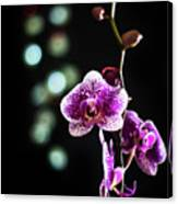 Exotic Orchid 2 Canvas Print