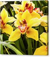 Exotic Orchids  Canvas Print