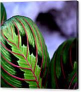Exotic Plant Canvas Print