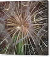 Experience The Dandelion Canvas Print
