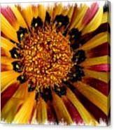 Explosion Of Color - Framed Canvas Print