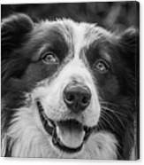 Expression Of A Border Collie Canvas Print