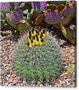 Expressionalism Budding Cactus Canvas Print