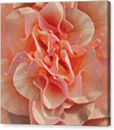 Expressionist Rose Canvas Print