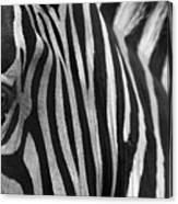 Extreme Close Up Of A Zebra Canvas Print