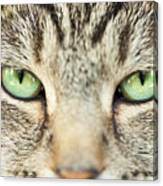 Extreme Close Up Tabby Cat Canvas Print