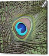 Eye  2 Canvas Print
