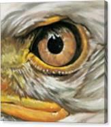 Bald Eagle Gaze Canvas Print