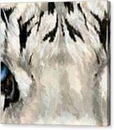Royal White Tiger Gaze Canvas Print