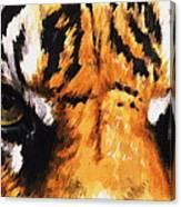 Sumatran Tiger Glare Canvas Print