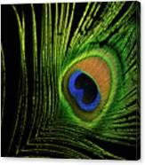 Eye Of A Peafowl Canvas Print