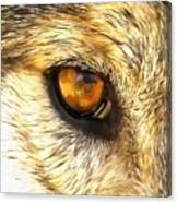 Eye Of A Wolf. Canvas Print