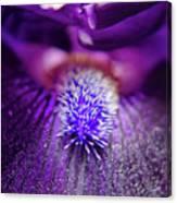 Eye Of Iris Nature Photograph Canvas Print